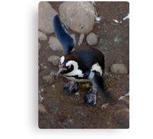 Penguin Flap Canvas Print