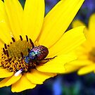 morning dew beetle by LoreLeft27