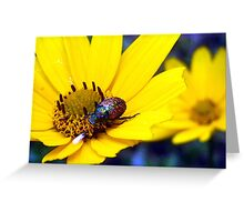 morning dew beetle Greeting Card