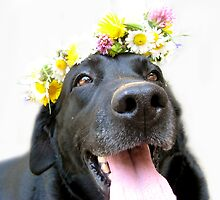 BLACK LABRADOR RETRIEVER HAPPY  by SofiaYoushi