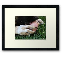 DOG LICK BONE Framed Print
