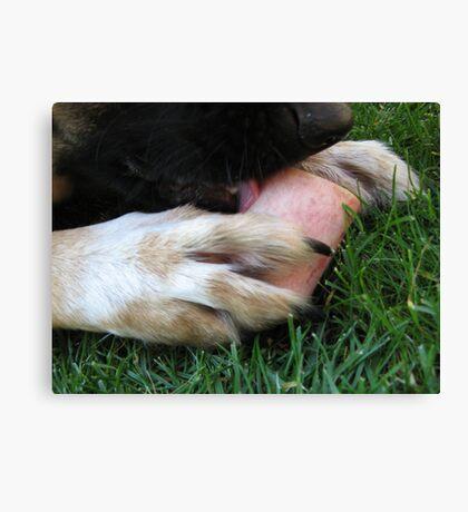 DOG LICK BONE Canvas Print