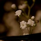 Small in Sepia  by Debbie Black