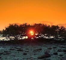 Tree by the sea by Luke Meers