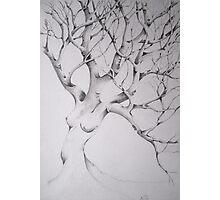 women tree Photographic Print