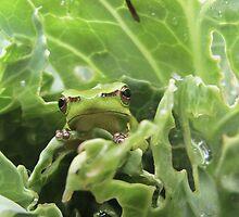 Sad Little Frog by Alison  Gainge
