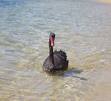 Black Swan by Daniel Rayfield
