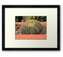Cactus - Huge Framed Print