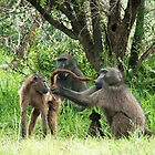 Baboon bonding by GRAEMEGM