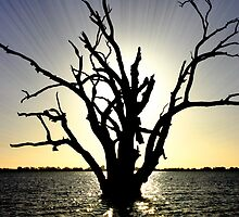 Lake Bonney Tree by David Thorburn