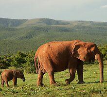 ELEPHANT ! by GRAEMEGM