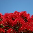 Pohutukawa Bloom by ardwork
