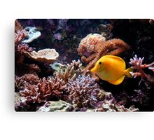 A Tropical Fish on the Reef Canvas Print