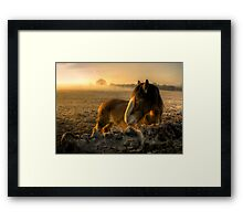 Sunrise Over Inquisitive Eyes Framed Print