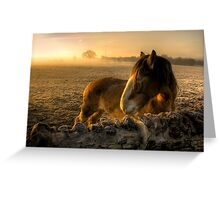 Sunrise Over Inquisitive Eyes Greeting Card