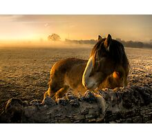 Sunrise Over Inquisitive Eyes Photographic Print