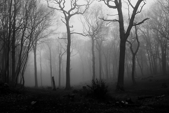 DEAD WOOD by Redtempa