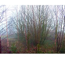 Foggy Glade Photographic Print