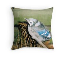 Baby Bluejay Throw Pillow