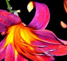 lily in the dark Sticker