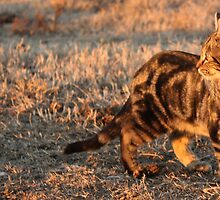 There Is A Tiger In Me... Bengal cat. by Qnita