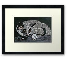 The Lesser Bush Baby Framed Print