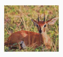 Steenbok Ram - Still Instinct Kids Clothes