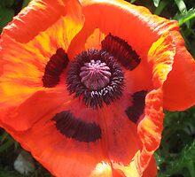 Poppy by Bombshell