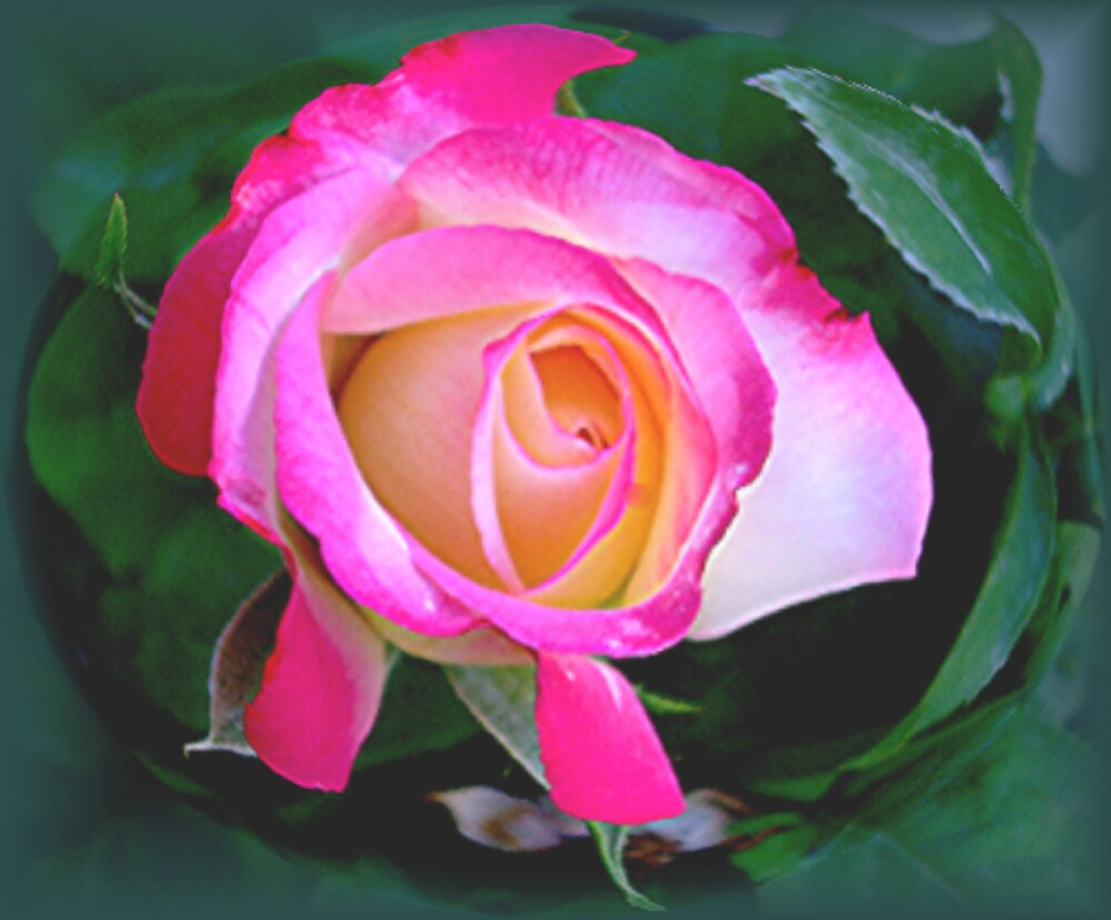 """""""She who has roses in her garden...must surely have roses in her heart.""""  by conilouz"""
