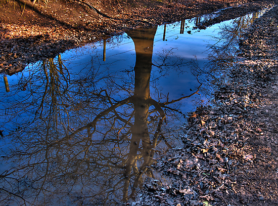 Tree Puddle by Andrew Dunwoody