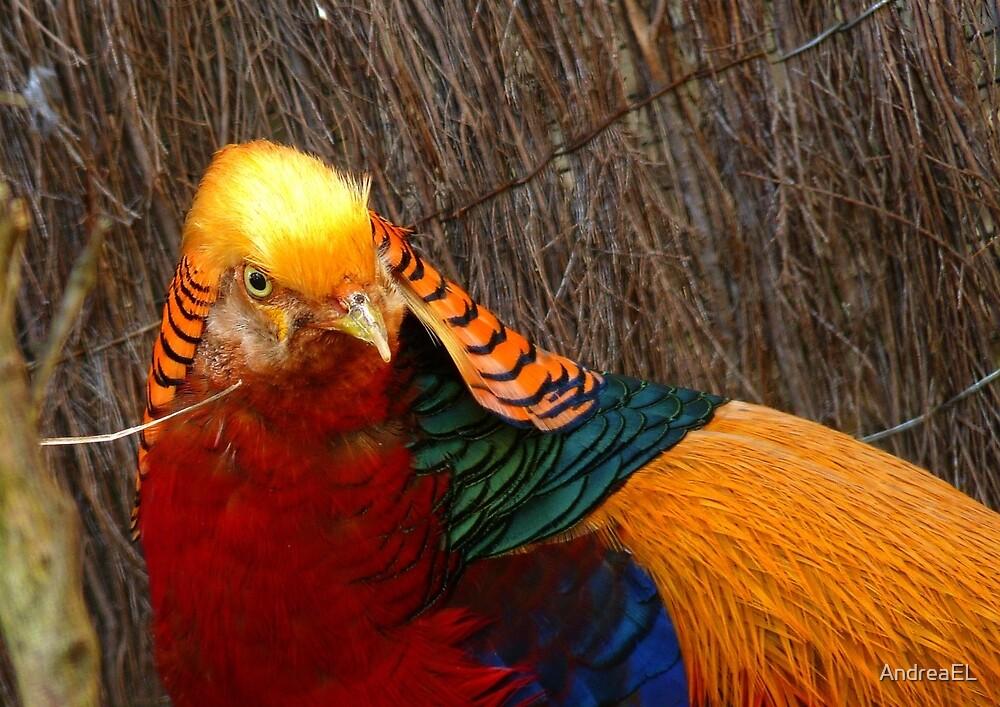 Bright & Beautiful - Golden Pheasant - NZ - Invercargill by AndreaEL