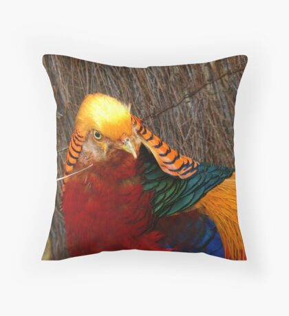 Bright & Beautiful - Golden Pheasant - NZ - Invercargill Throw Pillow