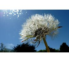 Lion's Tooth!  - Dandelion - NZ - Southland Photographic Print