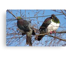Don't worry! Wood Pigeon Pair - New Zealand Canvas Print