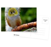 Are you QUESTIONING ME! - Silvereye - Wax Eye - New Zealand Postcards