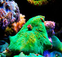 Green Mushroom by Tyler Thomas
