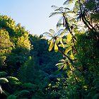 New Zealand/Aotearoa by kevin smith  skystudiohawaii