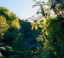 Punga Tree Ferns by kevin smith  skystudiohawaii