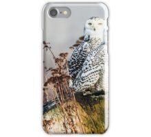 Snowy Owls iPhone Case/Skin