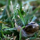 Snail Shower by Debbie Sickler