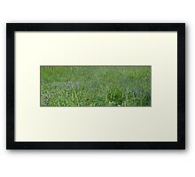0045 - HDR Panorama - Violets 3 Framed Print