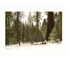 Sequoia Scale Art Print