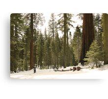 Sequoia Scale Canvas Print