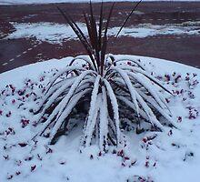 Spider Snow Plant by wanda1505