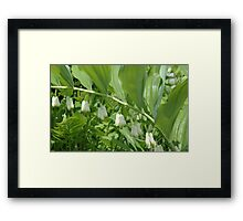 0060 - HDR Panorama - Solomon's Seal Framed Print