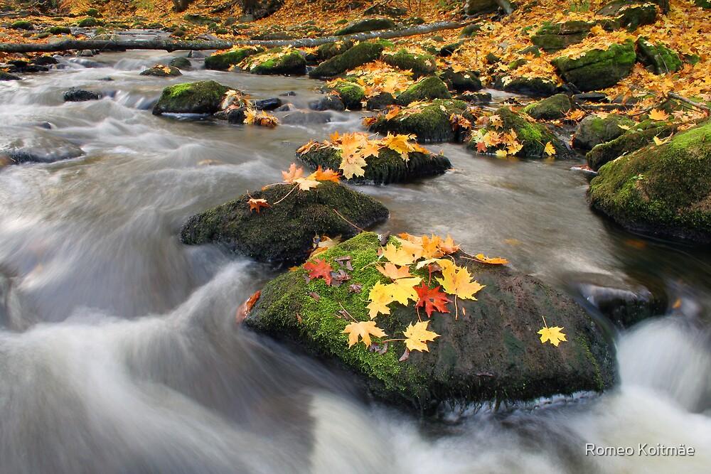 Autumn by Romeo Koitmäe