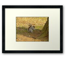 Just snacking ! Framed Print