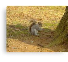 Just snacking ! Canvas Print