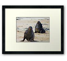 Leave us alone would you! NZ Sea Lion - Rapoka - Rare find! Framed Print