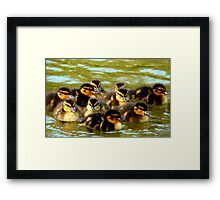 We're Fluffy Jewels - Ducklings - NZ - Southland Framed Print
